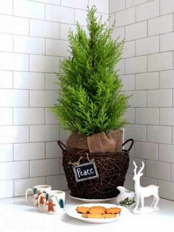 small-christmas-tree-4